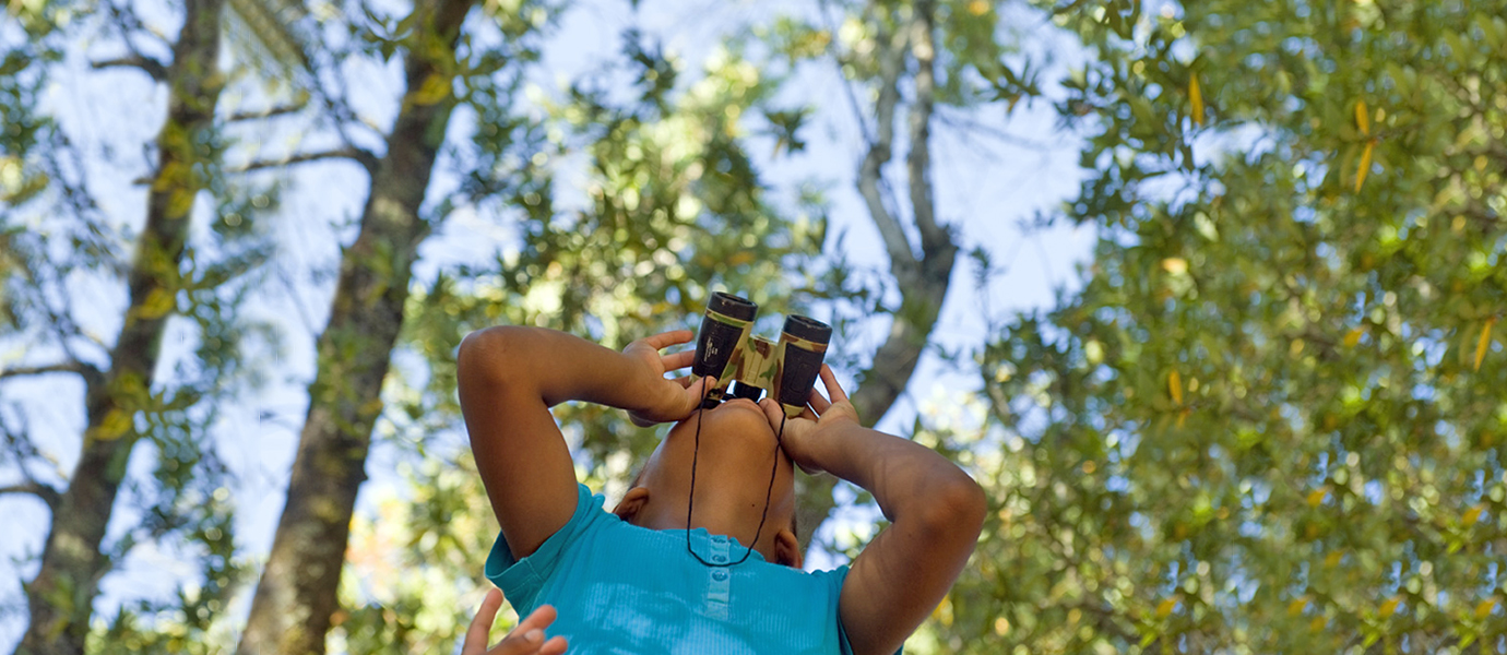 Child with binoculars looks up into the trees